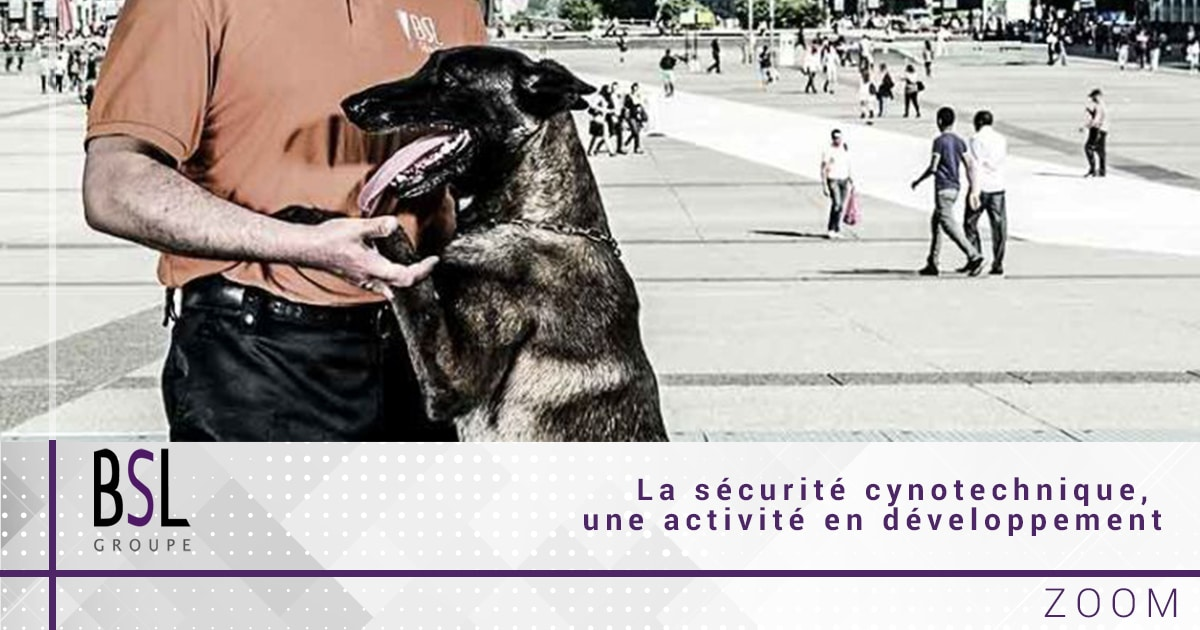 groupe-bsl-securite-securite-cynotechnique